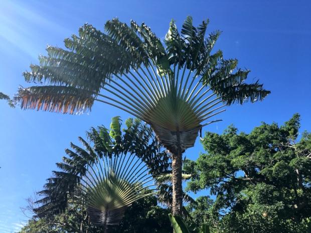 Jardin_Botanique (3)